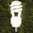 图库照片: Energy saving light bulb.