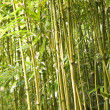 Bamboo stalks. - Stock Photo