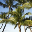 Palm trees. — Stockfoto #9531440