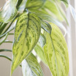 Houseplant. - Stock Photo