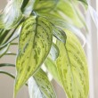 Houseplant. — Stock Photo