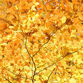 Yellow Fall foliage. — Stock Photo