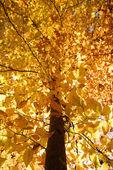 Drzewo jesień kolor. — Zdjęcie stockowe