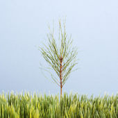 Sapling tree and grass. — Stock Photo