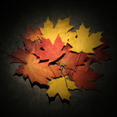Fall colored maple leaves. — Stock Photo