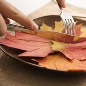 Fall leaf concept. — Stock Photo