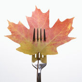 Pierced maple leaf. — Stock Photo