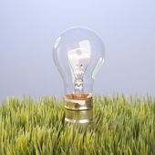 Light bulb in grass. — Stock Photo