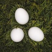 Three white eggs in grass. — Stock Photo