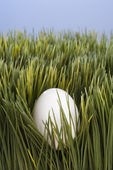 Egg setting in grass. — Stock Photo