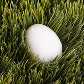 White egg in grass. — Stock Photo