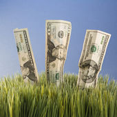 Paper money in grass. — Photo
