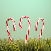 Three candy canes in grass. — Stock Photo