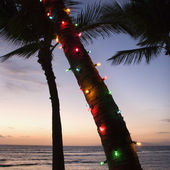 Colored lights on palm tree. — Stock Photo