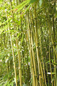 Bamboo stalks. — Stock Photo