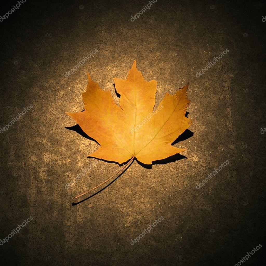 Хентай листья клёна 4 фотография