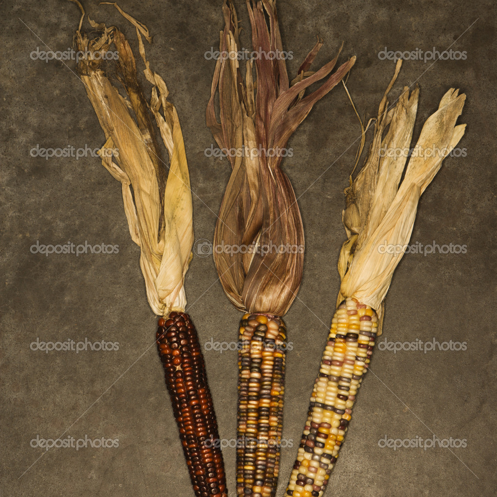 Three ears of multicolored Indian corn against black background. — Stock Photo #9530856
