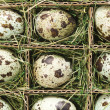 Speckled eggs. - 图库照片