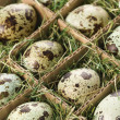 Speckled eggs. — Stockfoto