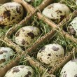 Speckled eggs. - Foto Stock