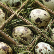 Speckled eggs. - Stok fotoraf