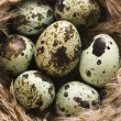 Royalty-Free Stock Photo: Eggs in nest.