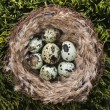 Eggs in nest. — Stock Photo #9553795
