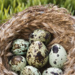 Eggs in nest. — Stock Photo