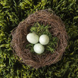 Eggs in nest. - Stock fotografie