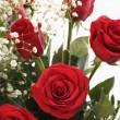 Bouquet of red roses. — Stockfoto