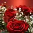 Bouquet of red roses. — Stock Photo