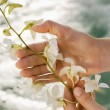 Hands holding orchids. — Stock Photo