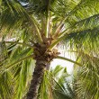 Palm tree. — Stockfoto
