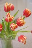 Tulip flowers. — Stock Photo