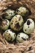 Eggs in nest. — Stock Photo