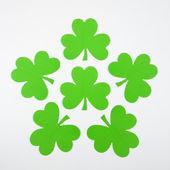 зеленый документ трилистники. — Стоковое фото