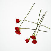 Red roses on white. — Stock Photo