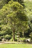 Asian garden in park. — Stock Photo