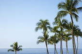Palm trees and Ocean — Stock Photo