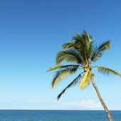 Palm tree and ocean. — Stock Photo
