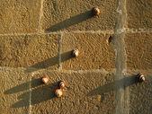 Sniglar på stenmur — Stockfoto