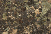 Lichens and moss on rock surface — Stock Photo