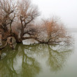 Tree in swollen waters — Stock Photo