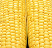 Close-up corn — Stock Photo