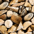 Stock Photo: Pile of wooden logs background