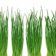 Green grass on the white background — Stock Photo
