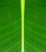 Texture of a green leaf background — Stock Photo