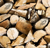 Pile of wooden logs background — Stock Photo