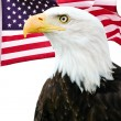 Bald eagle with American flag — Stock Photo #8551116