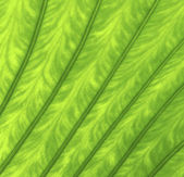 Texture of a green leaf as background — Stock Photo